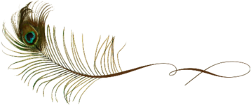 Peacock_Feather_3